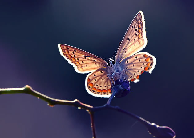 butterfly-pictures-28