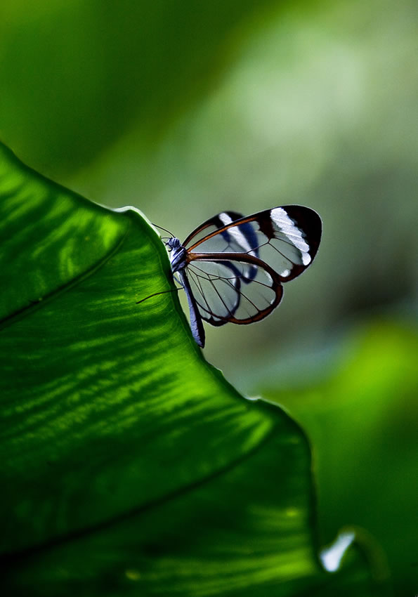 butterfly-pictures-36