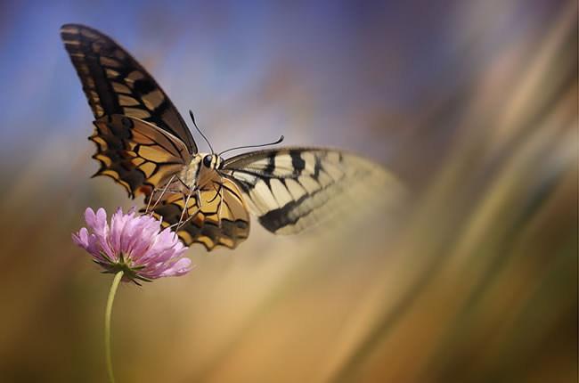 butterfly-pictures-46