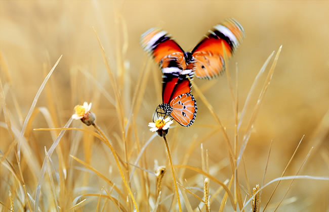 butterfly-pictures-5