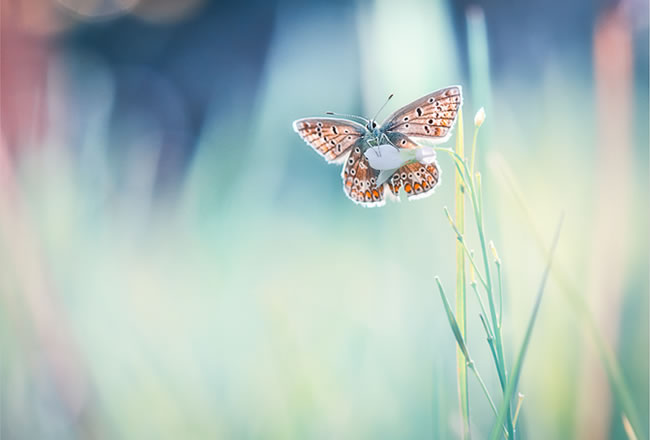 butterfly-pictures-6