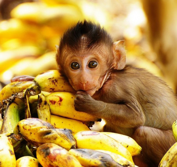 40 Incredibly Cute Baby Animal Pictures around the World