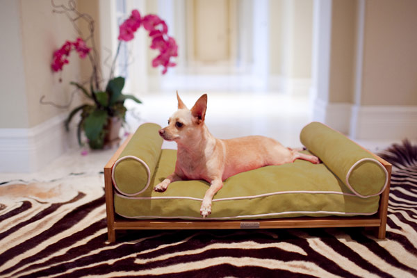 furniture for pets 1 Comfortable Furniture for Pampered Pets by Pet Lounge Studios