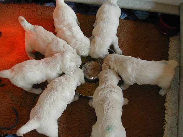 Meal Time Puppies