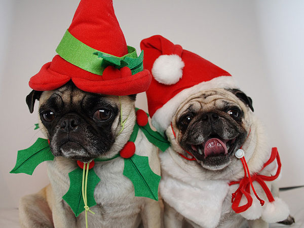 Funny X-mas Picture
