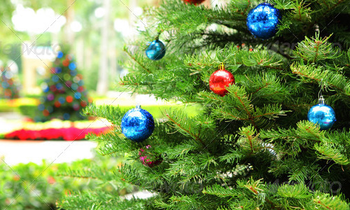 best selling chritmas tree clear bg Best Selling Photographs of Christmas Tree