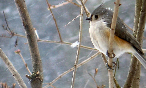 winter photography titmouse Chill Winter Photography