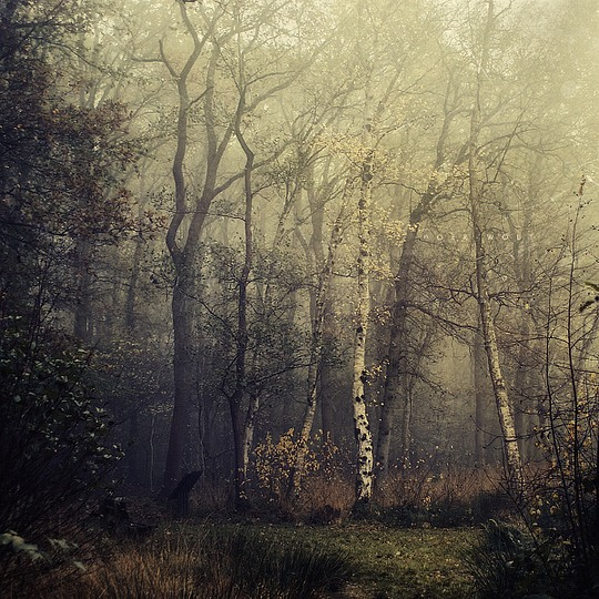 Stunning Photography by Oer-Wout