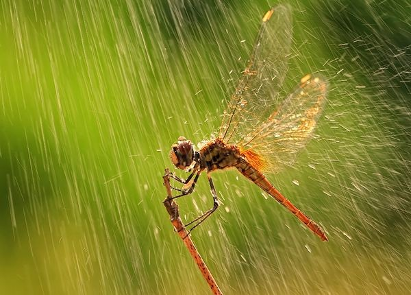 rain_photographs_and_pictures_10
