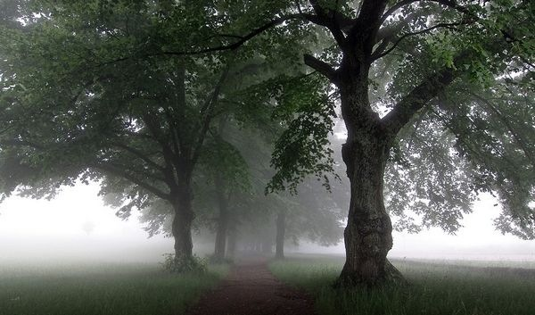 rain_photographs_and_pictures_16