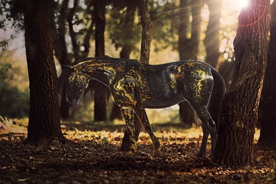 Unique Horse Photo Manipulations by The Enemy Studio