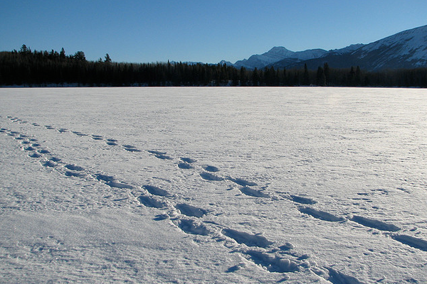 Patricia Lake photograph snow shoes walking tracks
