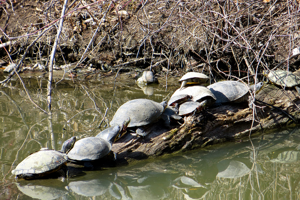 a turtle family on the first day of spring