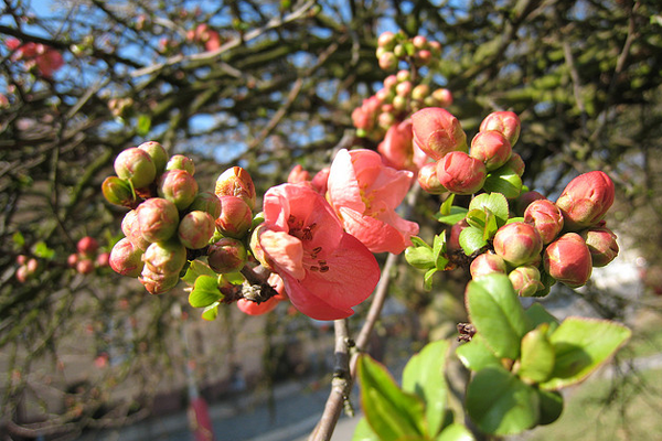 spring time budding flowers nature