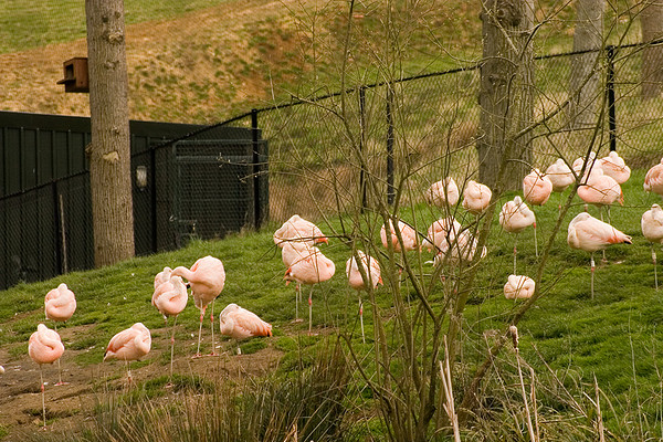 nature park reserve pink flamingo birds