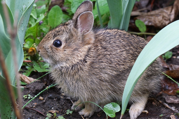 brooklyn new york springtime small bunny