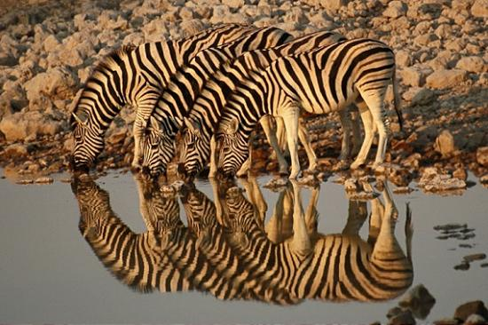 Reflection Photography18 50 Fantastic Reflective Photography Examples