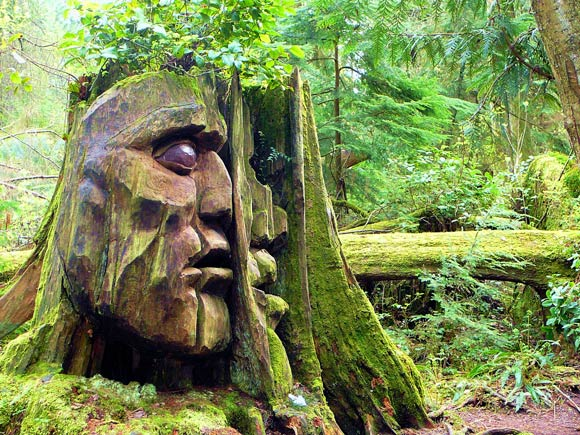 huge face carving in tree