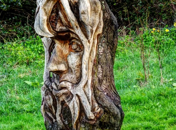 old face carved in tree