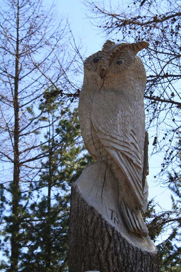 Owl carved in tree