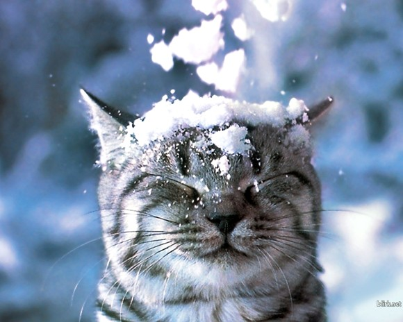 3a winter snow cats animals closed eyes 1280x1024 wallpaper