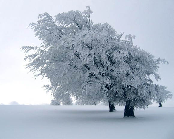 4 nature_winter_trees_frozen_1280x1024_wallpaper