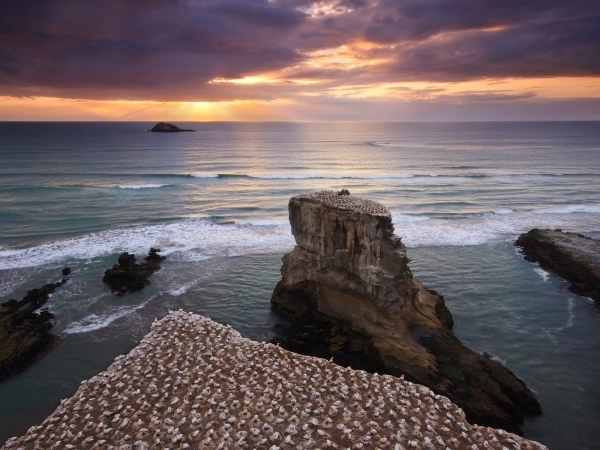 muriwai gannet colony 40 Awesome HD Wallpapers Collection