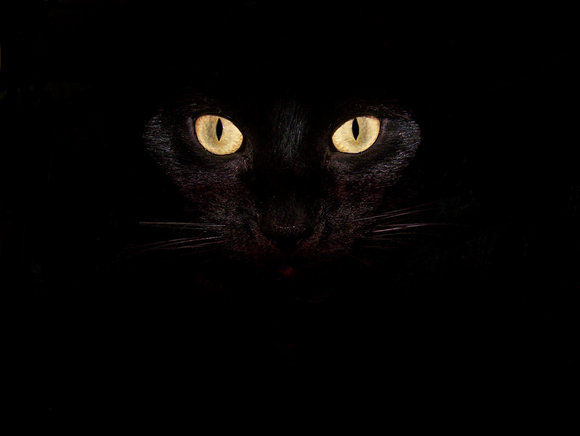 black Cat Wallpaper