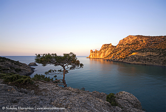 Sunrise on rocky coast of Black Sea with juniper tree Best Sunrise Landscape Wallpapers