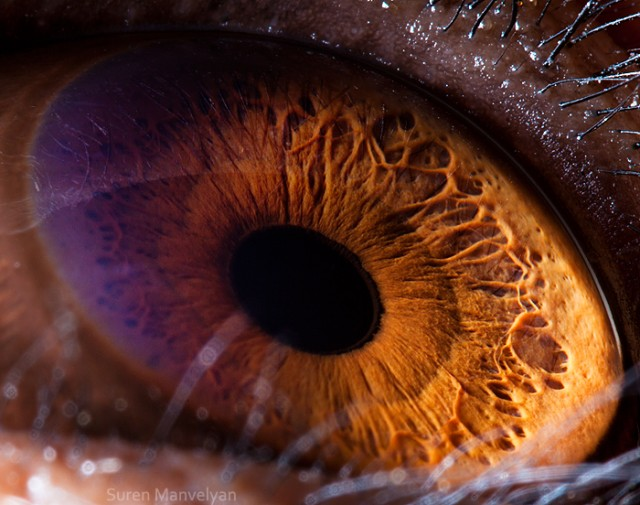 62 e1402417040887 Macro Photography Of Animal Eyes   Suren Manvelyan