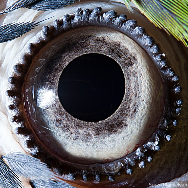 64 e1402417238839 Macro Photography Of Animal Eyes   Suren Manvelyan