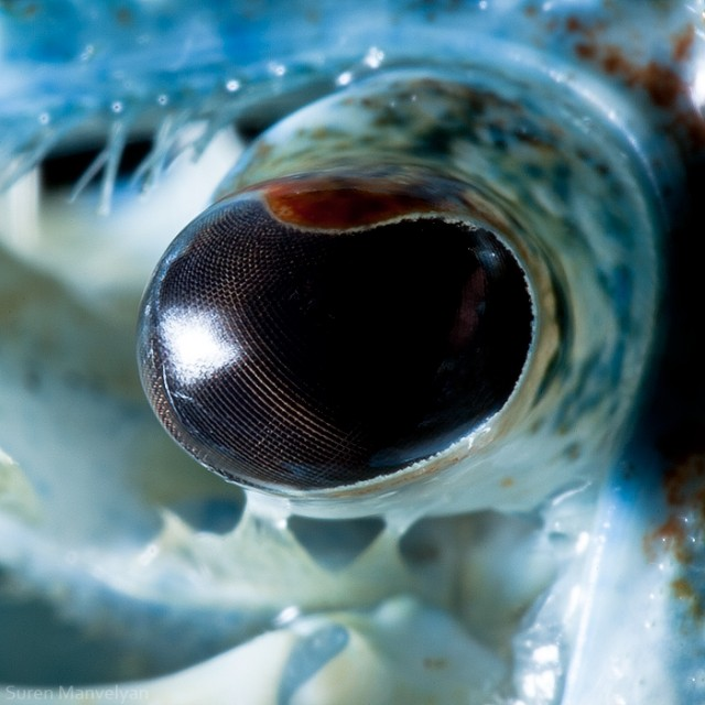 70 e1402417828714 Macro Photography Of Animal Eyes   Suren Manvelyan