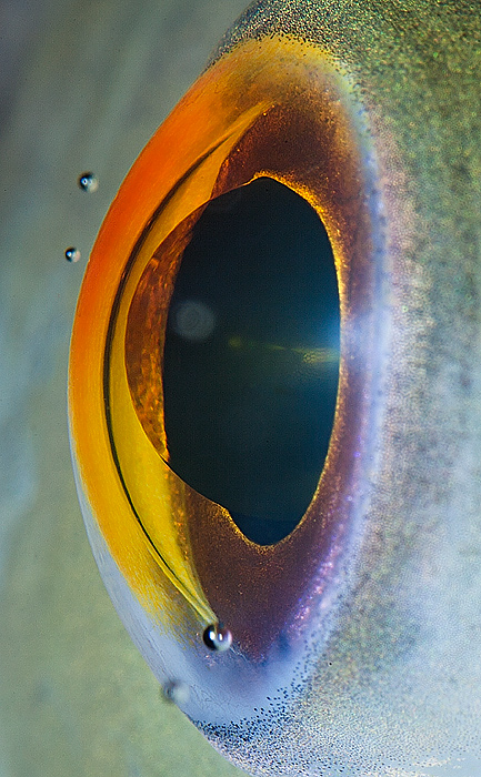 73 Macro Photography Of Animal Eyes   Suren Manvelyan