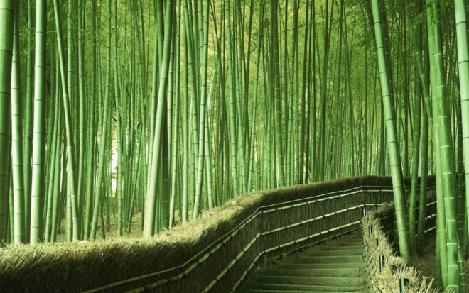 beautiful trees bamboo forest