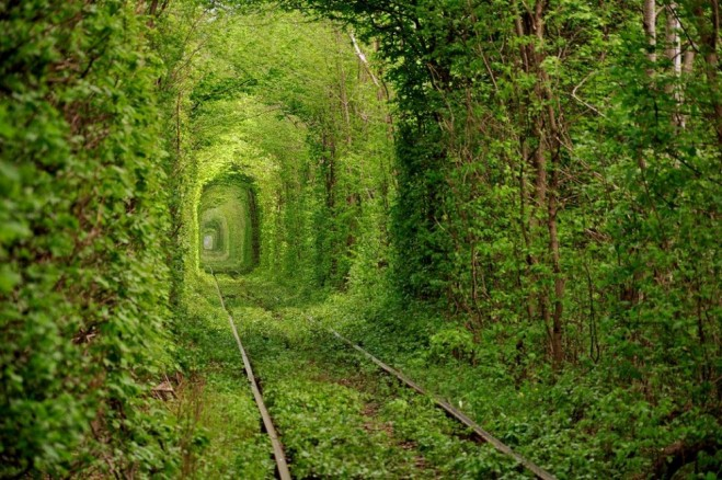 beautiful trees tunnel