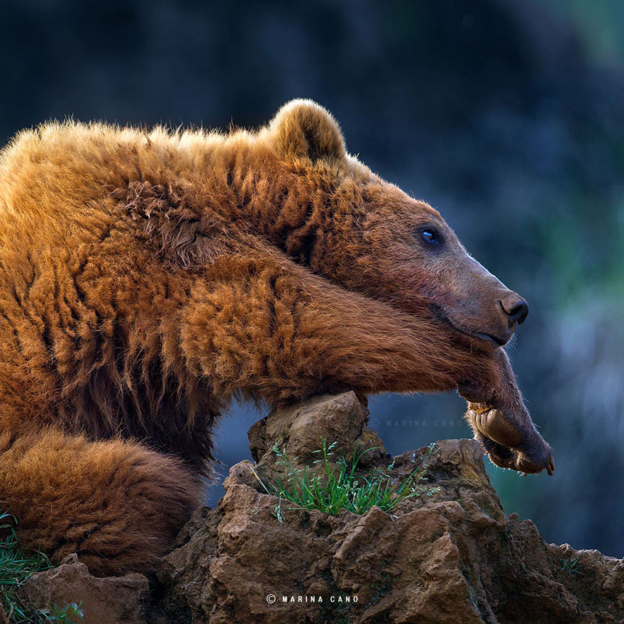 animal-wildlife-photography-marina-cano-2