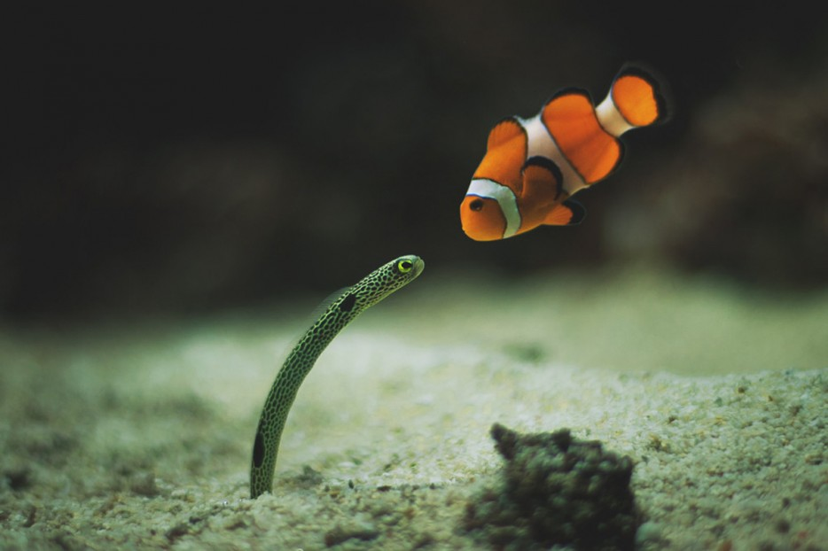 A%20clownfish%20and%20eel%20meet%20for%20the%20first%20time.%20