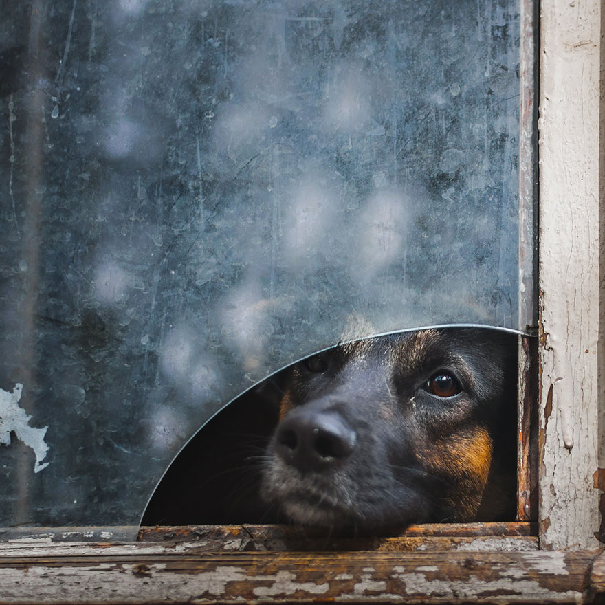 animals-looking-through-the-window-10