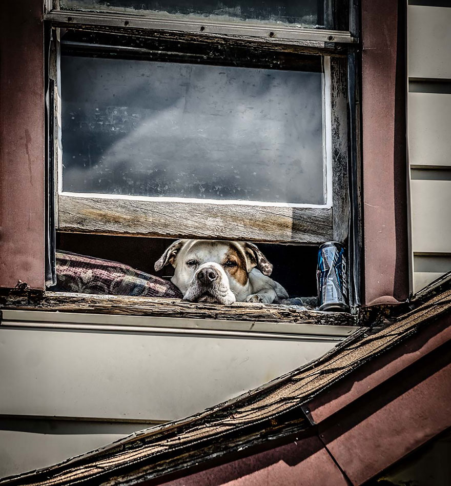 animals-looking-through-the-window-11