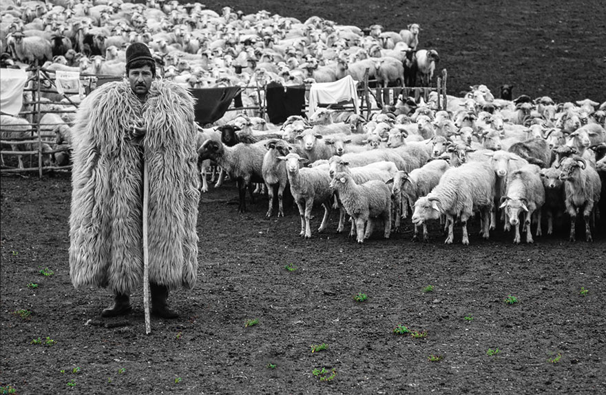 sheep-herds-around-the-world-12