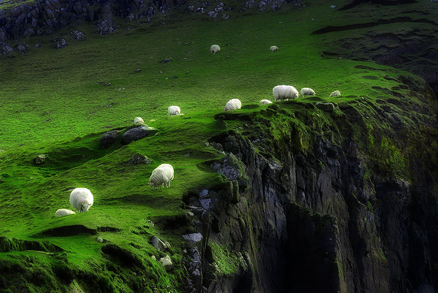 sheep-herds-around-the-world-15