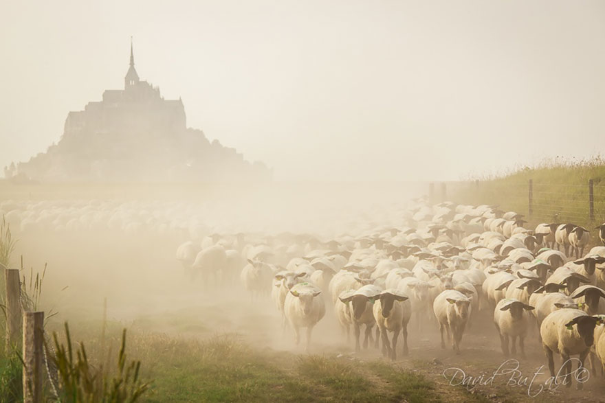 sheep-herds-around-the-world-16