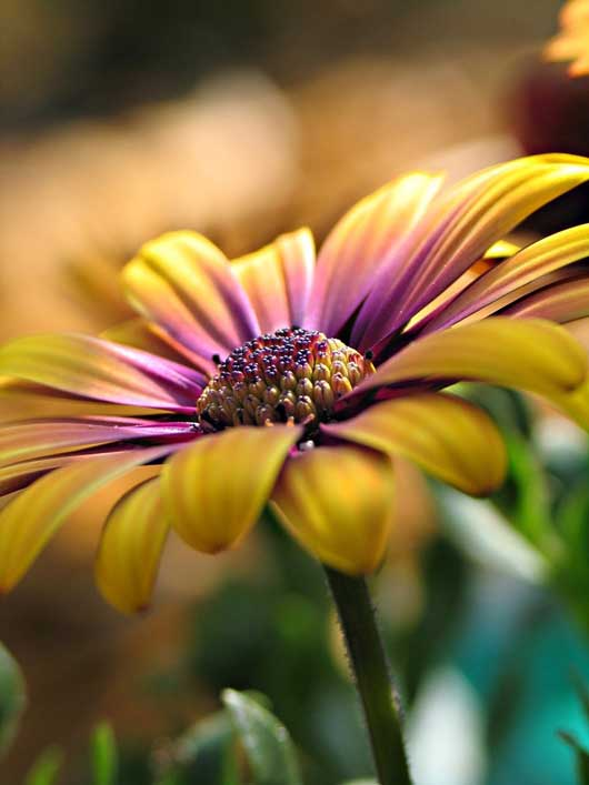 Eye Catching And Inspirational Flower Photography 016 Inspirational and Eye Catching Flower Photography