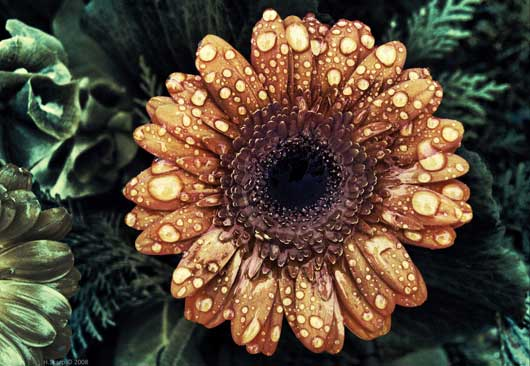 Eye Catching And Inspirational Flower Photography 025 Inspirational and Eye Catching Flower Photography