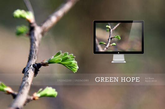 HD Wallpapers Green Hope Best HD Wallpapers Will Enhance Look of Desktop