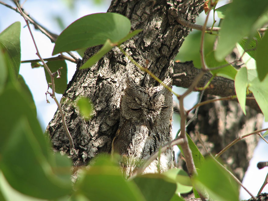 owl-camouflage-disguise-14