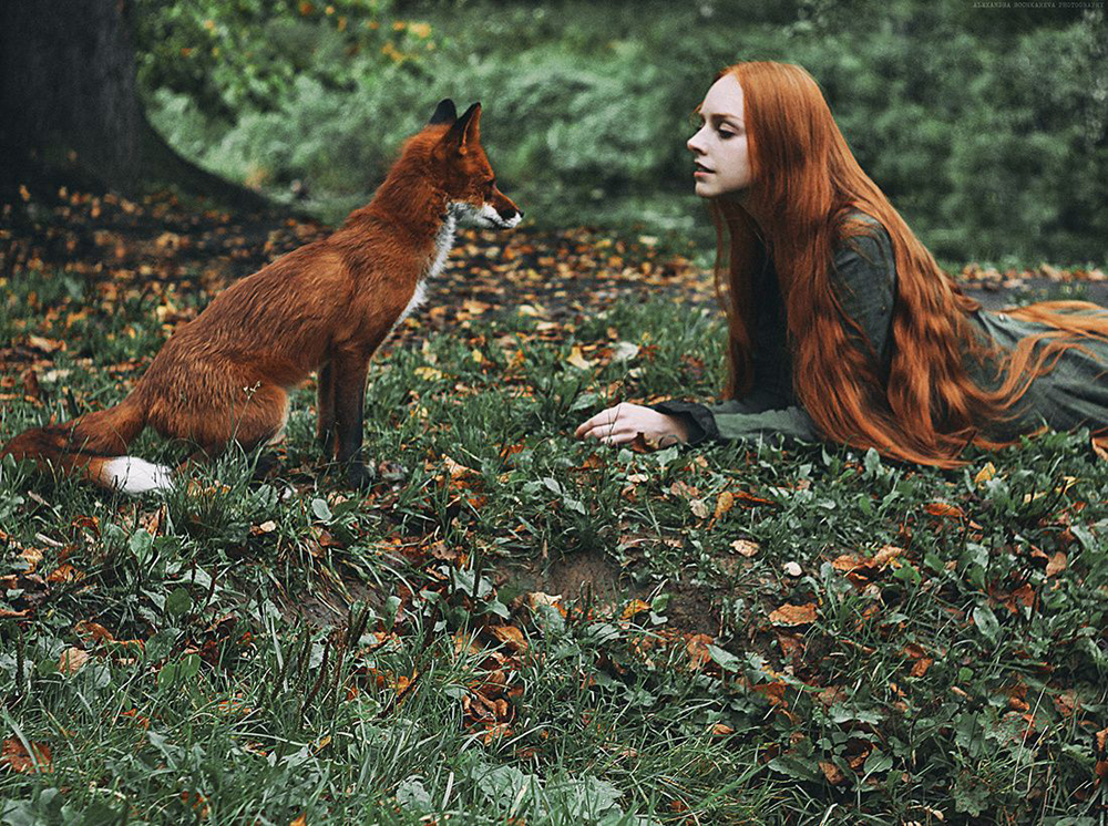 fox Alice photo